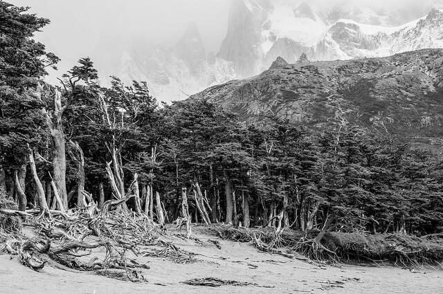 Black and White Landschaft